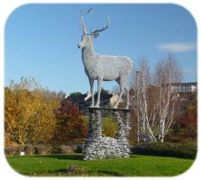 SCOTLAND 2019 - Our Three Week Driving Trip - Part 4 - Lomondgate Stag